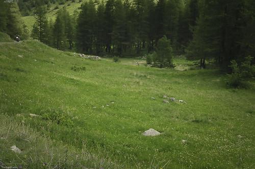 Marmotte - Col de la Cayolle