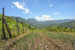La Milpa (ruimc77) Tags: nikon d700 nikkor 28mm f28 ais milpa los altos san juan cancuc chiapas mexico méxico rural landscape paisaje paisagem