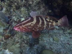Abaco-7087526 (smithjustind) Tags: abaco bahamas diving sailing scuba snorkeling