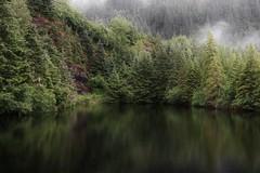 fascination (wintercove) Tags: rain fog mountain tree alaska