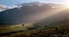 Spotlit Pine (Panorama Paul) Tags: paulbruinsphotography wwwpaulbruinscoza southafrica westerncape greyton overberg riviersonderendmountains mountains valley clouds spotlight tree sunrise nikond800 nikkorlenses nikfilters