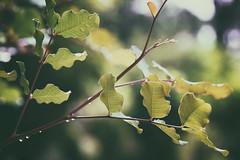 Summer rain (Angelo Aversa) Tags: nikon summer rain d610 leak wood tree water bokeh green life mood happy sad time