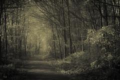 Always keep walking (Netsrak) Tags: baum bäume eu eifel europa europe farbe forst frühling landschaft natur wald forest landscape nature spring tree trees woods