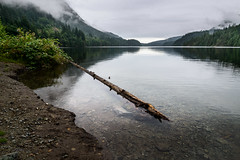 Buntzen Lake (briantolin) Tags: buntzenlake britishcolumbia forest nature woods lake water hiking hikingtrail