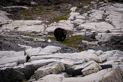 torngat0366 (Destination Labrador) Tags: morrow torngatmountainsnationalpark scenerywildlife scenery summer summerscenery 2017