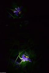 Light Reflection (_pkm_photography (thanks for 750K views)) Tags: pkmphotography2017 dslr nikon d3300 nikond3300red nikkor afsnikkor55300mm14556ged sooc passiflora