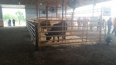 MN Cattlemen's Summer Beef Tour