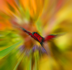 Firebird (ashokboghani) Tags: abstract abstractart photoshop photoshopart digitalart digitalpainting modernart