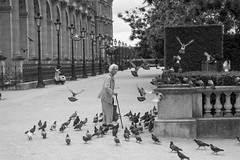 Pigeons (thpwilliams) Tags: blackandwhite louvre thelouvre woman pigeon pigeons birds park paris france street streetphotography bw action movement old senior french paths gardens royalty garden parisfrance