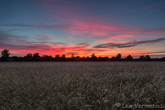 Groenekan, the Netherlands (Lex Vermeend Photo's) Tags: sunset sunrise beukenburg groenekan zonsopkomst zonsondergang utrecht netherlands nederland nature nederlands nederlandnetherlands ngc cornfield