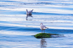 Ireland - Bray (Marcial Bernabeu) Tags: marcial bernabeu bernabéu ireland irlanda bray playa beach sea mar oceano océano ocean atlantic atlántico atlantico blue azul birds aves pajaros pájaros water agua