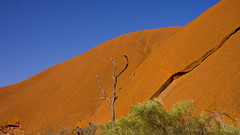 Life and Death : Uluru , in the red hot centre of Australia (dirk huijssoon) Tags: uluru australia redcentre outback