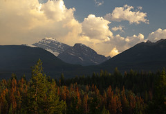 Valley View (Kristian Francke) Tags: mountain valley outdoors landscape nature natural rockies jasper national park canada alberta pentax hike sunset tree trees pine spruce cloud sky blue summer
