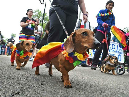 Pride flag capes for dogs