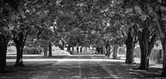 The Burlington Bike Path (michael.mckennedy) Tags: bike run vermont burlingtonvermont blackandwhite road trees runner jog jogging vt