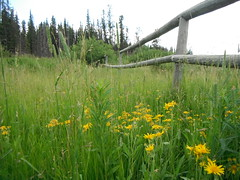 Heartland Nature Reserve (Mr. Happy Face - Peace :)) Tags: art2017 fenced fence hff happyfencefriday albertabound cans2s canada150 naturepark canadaparks hiking scenery landscape wildflowers floral flowers mellowyellow forest meadows