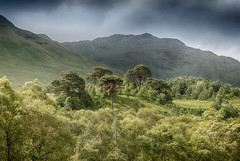 Glen Falloch (Osgoldcross Photography) Tags: trees glen scotland glenfalloch highland summer landscape leaves firtrees scotspine alba ecosse holiday nikon nikond810 raw wood sky mountains hills fells hillside nature naturalhistory