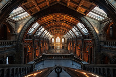 Museo de Historia Natural (Londres)30/07/2017 (protsalke) Tags: museum london history architecture museo lights londres nikon national spaces colors nikkor1635f4vr interior natural view arquitectura iluminación nikond700 symmetry lines arcs