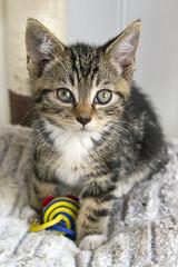 Duncan (ambeizzi) Tags: cat cats pretty pet pussy pussycat feline cute love aww fluffy furry babies pets