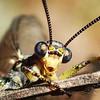 Adult Antlion (Ryan_Reynolds@PSI) Tags: best macro instagood bugs entomology macrophotography closeup insects nationalgeographic wildlifephotographer macroshots zoomedin mymacrophotography beautiful art fantastic wonderful wow thailand korea greece romania ukraine kiev