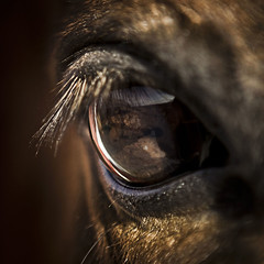eye OF horse 4 (tonywoodphoto) Tags: light mood timeofday documentary