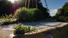 Cedar Springs (BurlapZack) Tags: panasoniclumixlx100 vscofilm pack01 dallastx medicaldistrict walkabout sidewalk 169 16x9 widescreen lowangle flare lensflare flora plant curb asphalt concrete city urban spring summer summertime wideangle