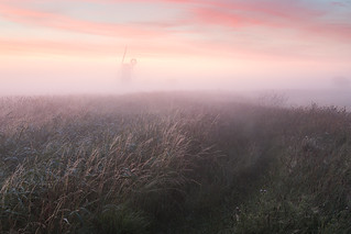 Mist on the marsh - Norfolk Broads