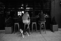 Doggie Bag, Please! (amanda.valeryvna) Tags: street photography urban black white market new york city nyc queens astoria