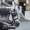 typical viennese .... (ewaldmario) Tags: fiaker schlossschönbrunn schönbrunn wien österreich at imperial imperialpalace lippizaner horses castle palace ewaldmario vienna square composition typicalviennese head animal bokeh dof light whitehorses tourism