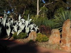 Guilfoyle's Vocano at the RBG (set of 16) (Lesley A Butler) Tags: victoria royalbotanicgardens melbourne guilfoylesvolcano australia