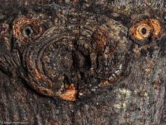 193/365 - Baumrinde mit Ast oder ??? (J.Weyerhäuser) Tags: texture macromonday hmm rinde auge eye nase nose structure struktur stacked