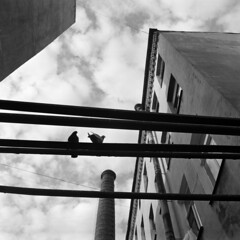 St.Petersburg, 07.2017 (Woodent) Tags: bw square 6x6 mediumformat hasselblad503cx carlzeissdistagon6035c ilfordhp5 diafine film monochrome cityscape urban pigeons stpetersburg