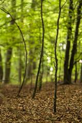 Waldimpression (Gerosas) Tags: aposonnart2135 gegenlicht juli mischwald natur offenblende remsmurrkreis sommer wald zeiss