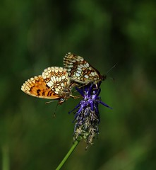 Make love with you (eliseroux1) Tags: photography amateur together melting colors beauty senses smooth nature lovers butterfly