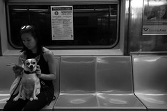 Cheese (phillytrax) Tags: nyc ny newyork newyorkcity manhattan 212 718 city urban usa america unitedstates metropolis metropolitan bw monochrome grayscale blackandwhite subway nycsubway 1train irt seventhavenueline dog woman r62