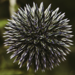 Texture (Budoka Photography) Tags: texture textures memberschoicetexture macromondays manualfocus macro flower flora nature manual