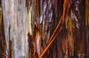 Eucalypus abstract. (danielnotnow1) Tags: leica leicafilm leicaanalog leicam3 leicam4 summicron50mmv4 fujivelvia50 slidefilm color colour film filmphoto filmphotography 35mm 35mmfilm 35mmfilmphoto analog analogue vintagecamera vintagelens sunny16 colors explore colorsinourworld colorfullaward flickrelite