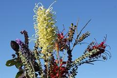 from the garden (Gillian Everett) Tags: flowers grevillea lavender basil queensland garden