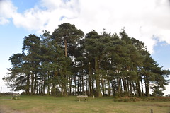 Camp Hill (Worthing Wanderer) Tags: eastsussex ashdownforest nutley duddleswell february winter walk weald sunny sussex woods woodland forest