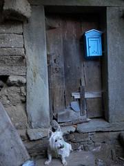 Puerta con buzón azul. (elena m.d.) Tags: trefacio zamora buzon azul viejo westy dog perro j