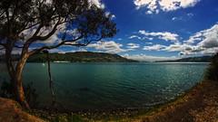 otago harbour 7 (Bilderschreiber) Tags: otago harbour hafen dunedin bight bucht ship sailing boot baum tree wide angle weitwinkel fisheye neuseeland newzealand southisland südinsel blau blue