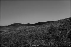 41.931201 - 8.621603 (bryzlame - photo) Tags: monochrome paysage landscape bryzlame sony rx100 corse ouest noir blanc capo feno