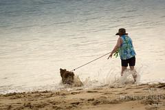 SZP_8879_pslr5 (Lakeside Annie) Tags: 2017 20170719 aussie australianshepherd bethanybeach bethanybeachde bethanybeachdelaware d7100 delaware denali july19 leannefzaras nikon nikond7100 redtri redtriaussie sarazphotography sigma sigma1770mm wednesday beachdog dog sandynose sandypaws beach delawarebeach