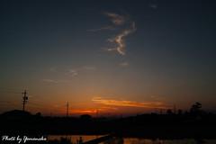 (yomoneko1) Tags: sigma dp1 merrill sunset sun setariaviridis cloud railroad dusk