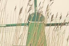 Windmill (sonia.sanre) Tags: naturaleza viento wind nature verde green holanda holand netherlands trigo wheat molino windmill