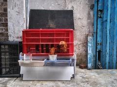 Redefining chicken in a basket, District 4. #saigon #hcmc #vietnam #travel #guardiantravelsnaps #guardiancities #light #color #igs_world #ourstreets #everybodystreet #EverydayEverywhere #somewheremagazine #myfeatureshoot #Creativeimagemagazine #MyPixelDia (genochio) Tags: saigon vietnam hcmc