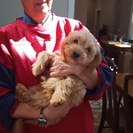 Aggie's Past Puppies !