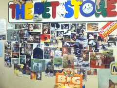 Wall  Of Pets (splinky9000) Tags: kingston ontario cataraqui centre the pet world wall of pets photographs dogs shihtzu beagle terrier chihuahua jack russell pug