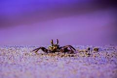 Crab! (gauthampilla) Tags: 700d canon lightroom ocean sea animal insect nature beautiful sunset sunrise beach crab