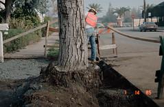 1985-01-03 (menloparkplanning) Tags: 19850103 mp1980s menlopark california sanmateocounty construction historicalphoto scannedphoto historical tree